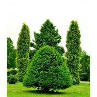 Удобрение Agrecol 100 дней для Хвойных растений 1,5 кг