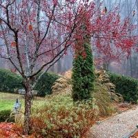 Удобрение Agrecol (Hortifoska) осеннее для Хвойных растений 1 кг
