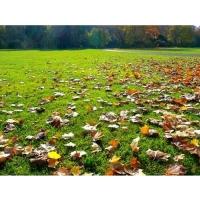 Удобрение Agrecol (Hortifoska) осеннее для Газонов 3 кг