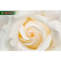Удобрение Agrecol для Роз 1,2 кг