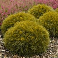 Удобрение Agrecol (Hortifoska) для Хвойных от пожелтения хвои 3 кг