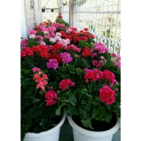 Удобрение Agrecol для Балконных растений 250 г