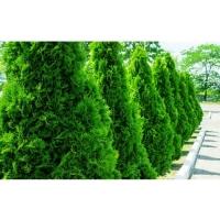 Удобрение Agrecol Hortifoska для Хвойных 15 кг