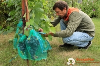 Сетка-мешок для винограда от ос, 2 кг