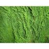 Удобрение Agrecol для Туй и хвойных растений 350 г