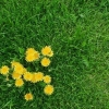 Удобрение Agrecol для Газонов от сорняков 10 кг