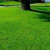 Удобрение Agrecol (Hortifoska) для Газонов от сорняков 3 кг
