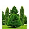 Удобрение Agrecol для Хвойных растений 10 кг