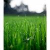 Удобрение Agrecol Hortifoska для Газонов 10 кг