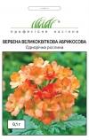Вербена крупноцветковая абрикосовая