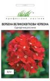 Вербена крупноцветковая красная