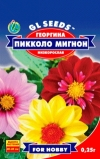 Георгина Пикколо Мигнон