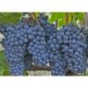Удобрение Agrecol для Винограда 1,2 кг